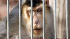 Animal Rights verzamelt 100.000 handtekeningen tegen dierenproeven
