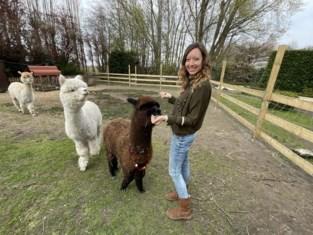 Reisagente Kim (32) had door corona weinig omhanden, dus start ze 'meet, greet & feed' met alpaca's