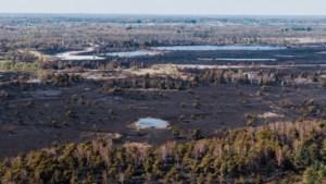 """""""Het is een ramp"""": brand in Brecht is onder controle, nu wordt de enorme ecologische schade duidelijk"""