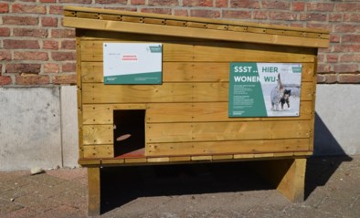 Zandhoven start samenwerking met Zwerfkat Wommelgem