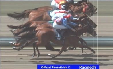 Dít is pas een finishfoto: jury heeft tientallen minuten nodig om winnaar(s) van paardenrace te bepalen