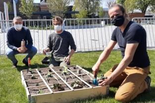 Tuinieren in vierkantemetertuintjes wetenschappelijk begeleid