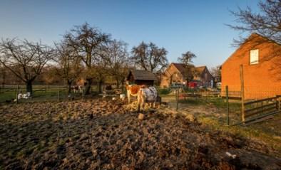 Rechter geeft stad ook in beroep gelijk over kinderboerderij