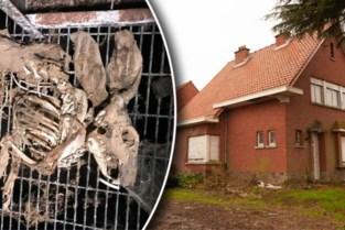 """Zaak van gemummificeerde konijnen is geseponeerd en dat is niet naar de zin van Animal Rights: """"Niemand die verantwoording aflegt"""""""