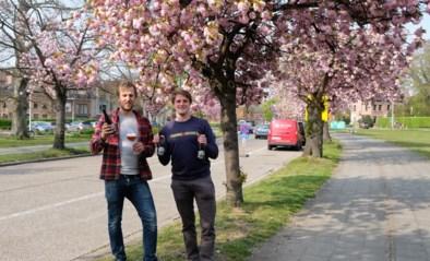 Niels en Evert uit Brasschaat brengen Japanse toets in bierglas