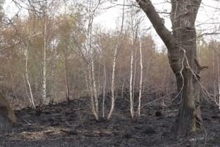 Zo verwoestend was de brand op het Groot Schietveld