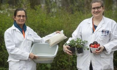 Lise (30) maakt aardbeien groter en gezonder … met vel van insecten