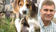 Hij zal niet niezen, maar ook je hond kan hooikoorts hebben: zo weet je of hij er last van heeft