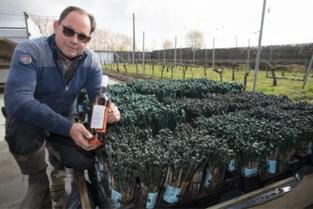 Wijnhuis Mérula breidt uit en produceert voortaan ook zomerse roséwijn