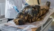 """Zwangere mummie doet egyptologen versteld staan: """"Nooit eerder gezien"""""""