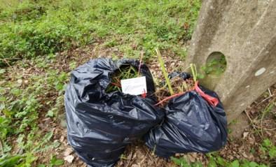 Twee zakken met afval van cannabisplantage gedumpt langs Abeek