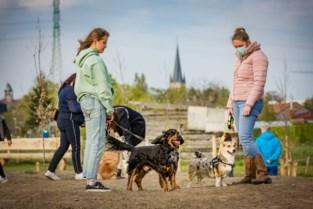 Vijfde hondenlosloopzone in Sint-Katelijne-Waver officieel geopend