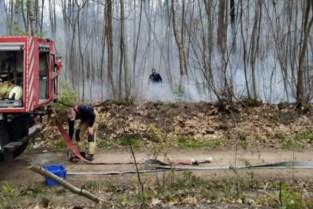 1.500 m² bos afgebrand in Schoonbeek
