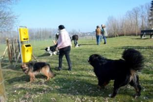 """Vlaams Belang jaloers op hondenweides bij buren: """"Roosdaal hinkt achterop"""""""