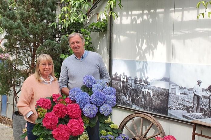 """Guy (70) en Bea (70) keren terug uit pensioen om familiebedrijf honderd jaar te laten worden: """"We konden planten en klanten niet missen"""""""