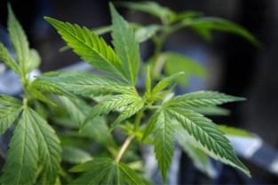 Vrouw naar politierechter omdat ze betrapt werd met cannabis