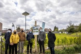 """Huiszwaluwen krijgen nieuw huis aan station Avelgem: """"We willen de kolonie hier houden"""""""