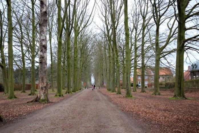 Historische bomendreef wordt vervangen omwille van NAVO-kerosineleiding
