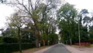 Helft bomen op Paul Lambertlaan gekapt, andere helft moet blijven staan