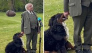 Puppy van Ierse president steelt de show tijdens ernstig interview over overleden acteur