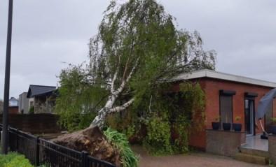 Dikke berkenboom valt door stormweer op huis in Smeermaas
