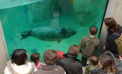 """Fikse korting voor bezoekers bij heropening Boudewijn Seapark, dat financieel zware tijden beleeft: """"De vaste kosten blijven doorlopen"""""""