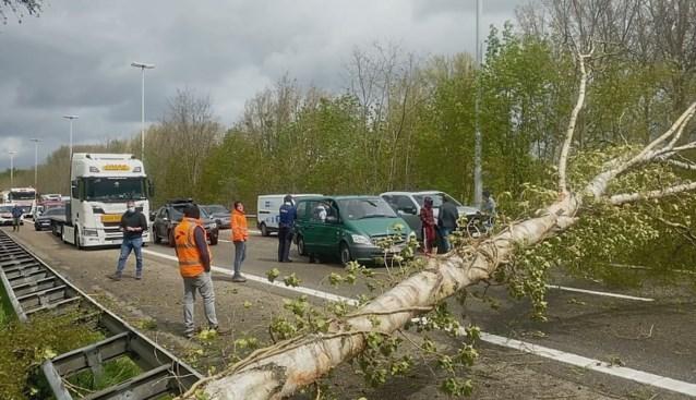 Stormschade Limburg: boom verspert E313 Hoeselt en boten beschadigd aan Schulens Meer