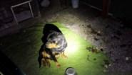 Twee verwaarloosde honden in beslag genomen in Zutendaal
