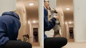 Vrouw (22) filmt emotioneel weerzien met hond nadat ze anderhalf jaar gescheiden werden door corona