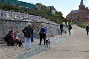 Eerste hondenwandeling van vzw Pantouf lokt tientallen hondenliefhebbers en hun viervoeters