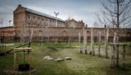 Koerier die drugs over de Mechelse gevangenismuur gooide riskeert 2 jaar cel