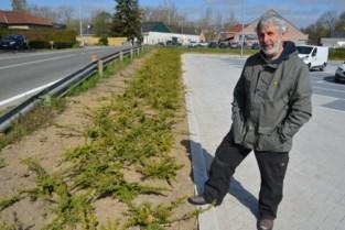 """Tuinarchitect niet te spreken over groenkeuze van gemeentebestuur: """"Op deze planten komt zelfs geen vlieg zitten"""""""