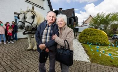 Paardenkoets brengt Katelijnse jubilarissen Mon en José naar vaccinatiecentrum