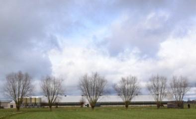 """Kippenkwekerij is na milieuvergunning ook bouwvergunning kwijt: """"Wat uiteindelijk met bedrijf zal gebeuren durft niemand nog voorspellen"""""""