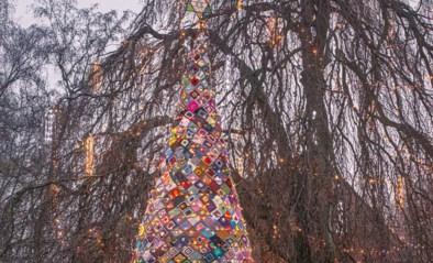 De Wollies mikken op warmste (en hoogste) kerstboom