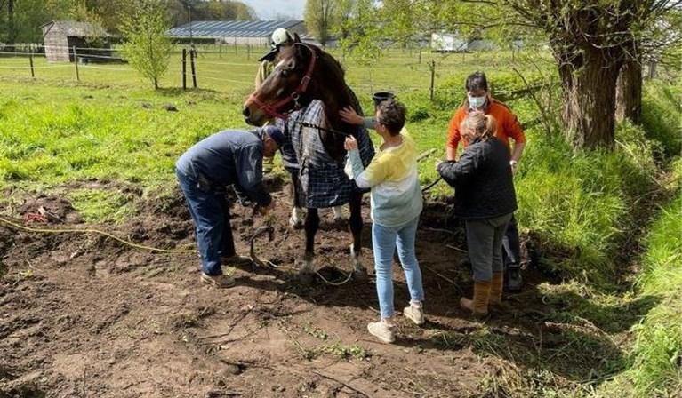 Brandweer redt vastzittend paard met graafmachine uit gracht