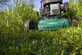 Gras in openbare tuinen en op rotonde Grote Markt wordt niet gemaaid