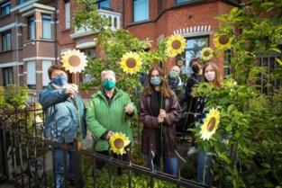 Groen organiseert actie om Mechelen vol zonnebloemen te zetten
