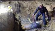 DOVO ruimt vliegtuigbom van 500 kilo op in Hasselt