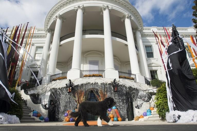 """Familie-Obama rouwt om trouwe viervoeter: """"Hij was exact wat we nodig hadden, en meer dan we ooit konden verwachten"""""""