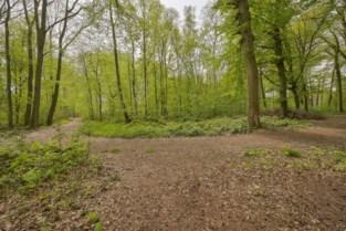 Bijna acht hectaren oud loofbos van domein Montens te koop
