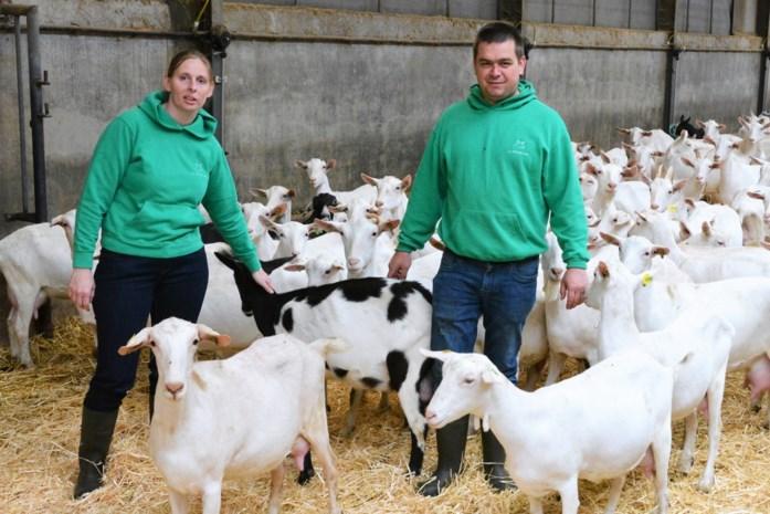 Liesje verkoopt geitenkazen uit eigen boerderij in gloednieuwe Mekkerhoek