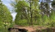Natuurpunt kapt 28 hectare bos in De Maten… voor meer beschermde natuur