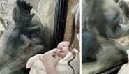 """Twee kersverse moeders delen prachtig moment in zoo: """"Had tranen in de ogen"""""""
