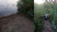 "Visser wordt achtervolgd door gigantische alligator: ""Oh my god"""
