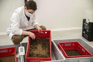 Onderzoek KUL, VITO en Thomas More vormt brug naar insectenverwerking op industriële schaal
