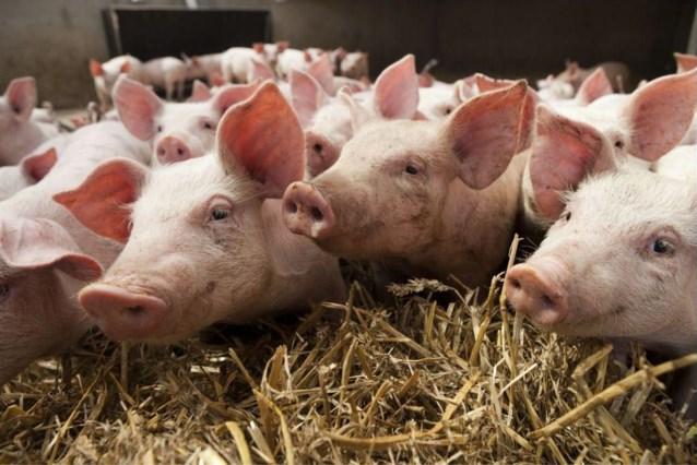 Landbouwer (46) overleden, vermoedelijk na inademen mestgassen