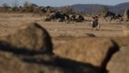 Gouverneur van Californië breidt noodtoestand wegens droogte uit