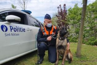 """Murphy is de eerste politiehond van Sint-Niklaas: """"Maar hij wordt niet graag geaaid als hij aan het werken is"""""""