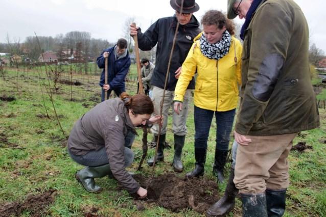 Vlaamse regering plantte al 1 miljoen bomen: zoveel bossen kwamen erbij in jouw provincie